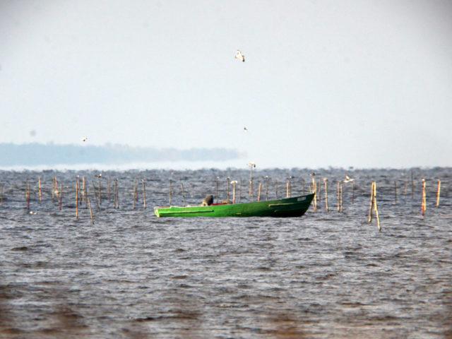 Współcześni rybacy na Zalewie Szczecińskim